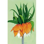 Fritillaria by David Calrow