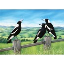 An Aussie Good Morning Magpies