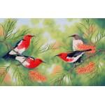 Scarlet Honeyeaters by Katherine Castle