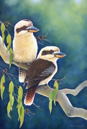 Afternoon At Minyon Falls Kookaburras