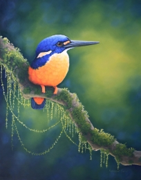 Allure Azure Kingfisher